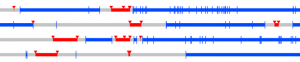 Part of Figure 4a from Williams et al. (under review; on bioRxiv): gene conversion events shown in red cluster within relatively short intervals. Plot spans ~30 kb.